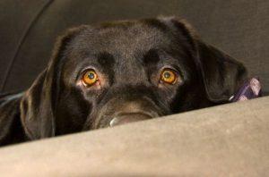 perros-miedo-listg